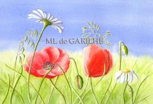 Aquarelle coquelicots et marguerites _modifié-1