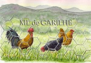 aquarelle de poules beaujolaises