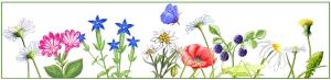 bandeau de fleurs.redm