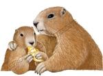 Marmottes et  bugnes RI.redim