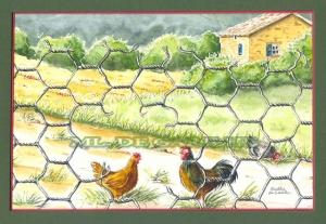 poules beaujolaises avec maisonRI
