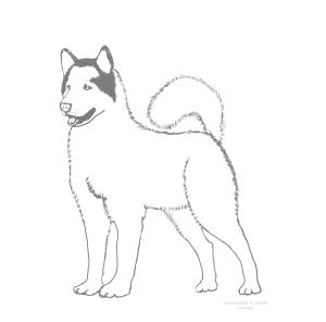 chien de trâineau coloriage